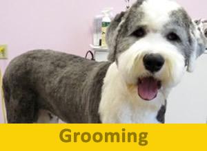 Grooming-300x220